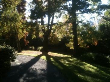 tree-against-the-sun