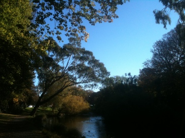 trees-river-duck